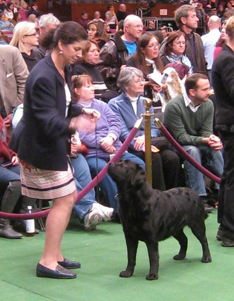 Westminster Kennel Club 2011